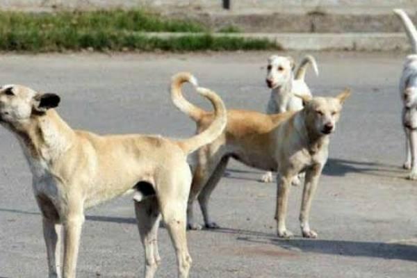 International Dog Day:दुनियां भर में आज मनाया जा रहा है डॉग डे..क्या है इसके पीछे की कहानी.!