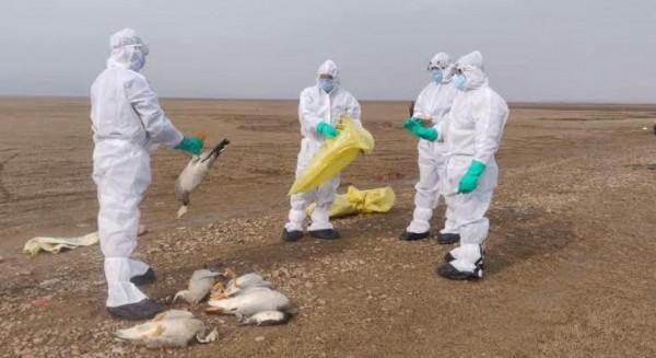 Bird flu news:यूपी में भी बर्ड फ्लू को लेकर हाई अलर्ट संकट गहराया
